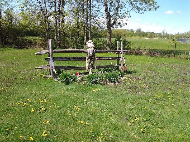 gardening perennial expanding, flowers, gardening, perennial