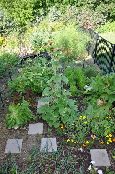kitchen garden update, gardening, kitchen design
