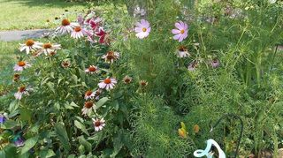 transplanted perennials from old home to new yard weed control, flowers, gardening, landscape, perennial
