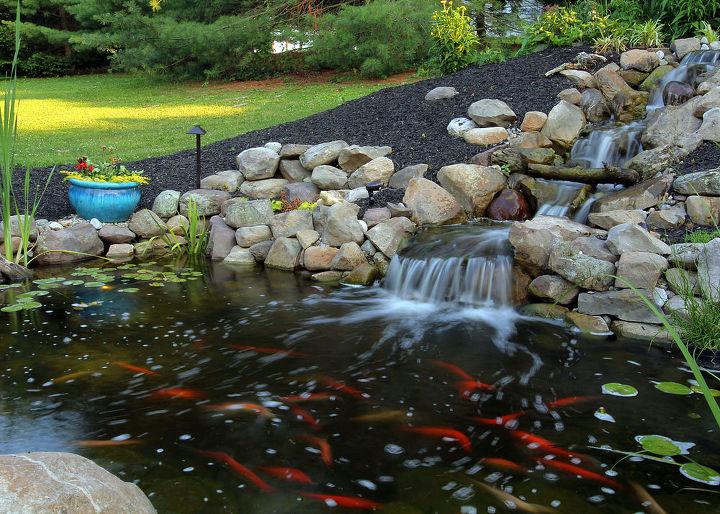 backyard pond rebuild hometalk