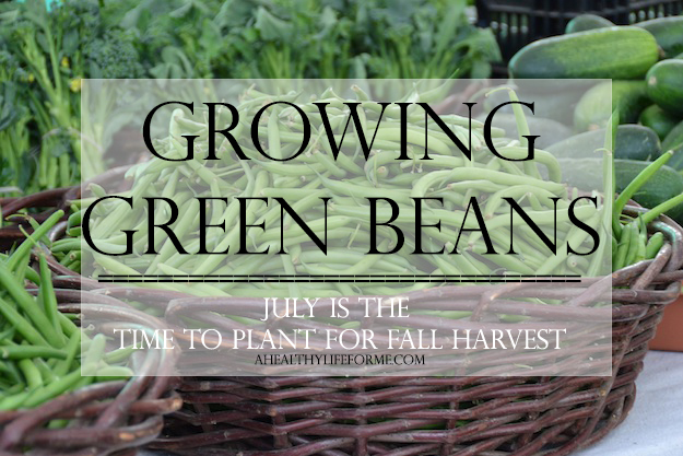 gardening green beans tips growing vegetables, gardening