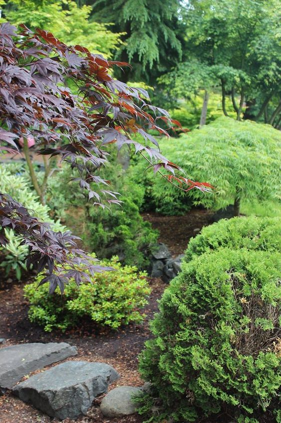 Green Acer Palmatum and friends