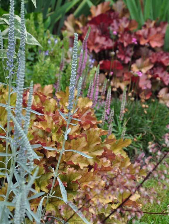 gardening tips heuchera shading colorful, gardening