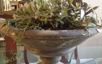 succulent savvy, flowers, home decor, succulents, The Container