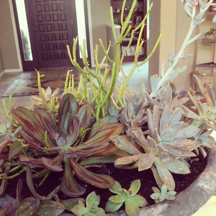 succulent savvy, flowers, home decor, succulents