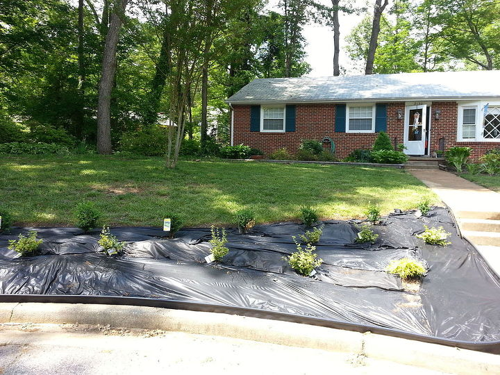 curb appeal fron yard update, curb appeal, gardening, landscape, lawn care