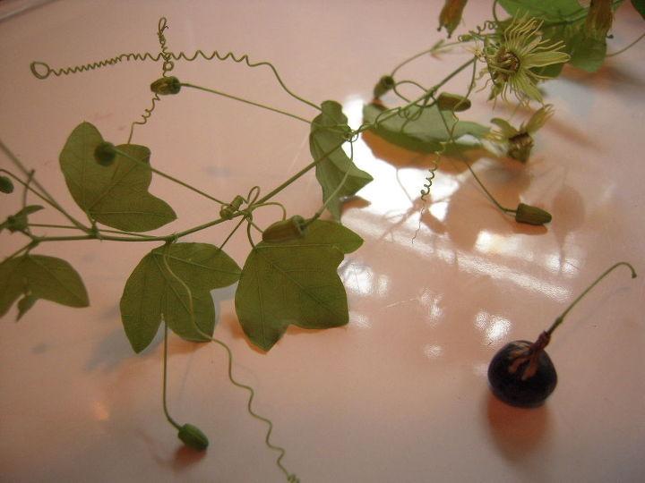 grape vine or not, gardening