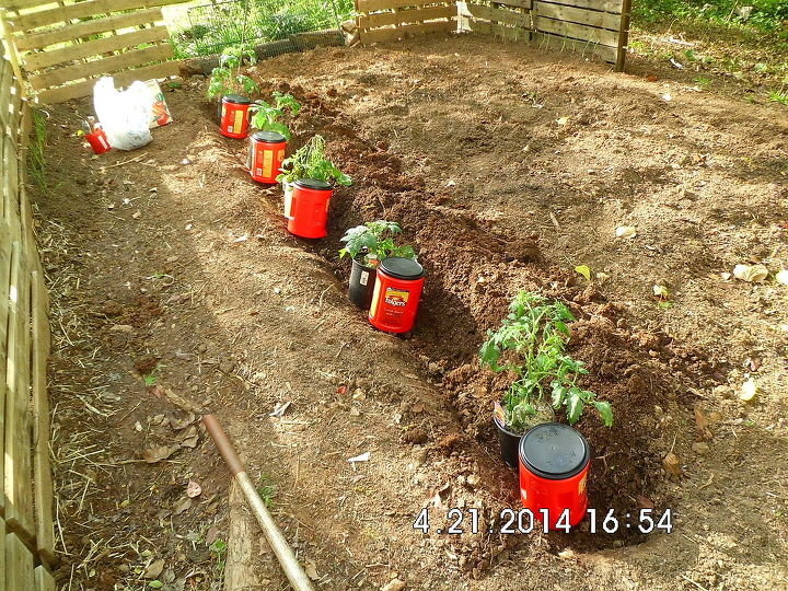 q what to do if tomatoes are no longer producing well, gardening