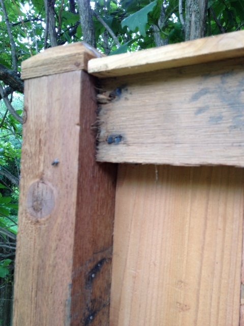 woodworking correcting poorly installed fence, fences, home maintenance repairs, how to, woodworking projects, Upper rail has been moved to top of pole and hammered over first set of nail holes