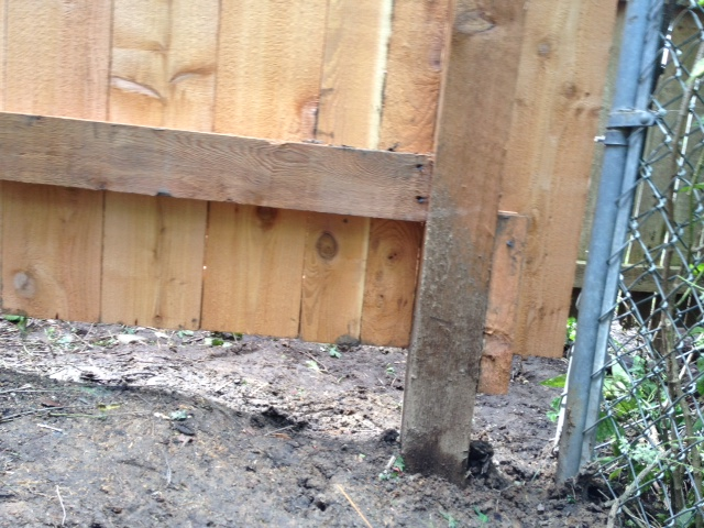 woodworking correcting poorly installed fence, fences, home maintenance repairs, how to, woodworking projects, Opposite corner shows rail to high gap connection to neighbors chain link