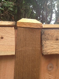 woodworking correcting poorly installed fence, fences, home maintenance repairs, how to, woodworking projects, Shows post cap top rails once they were removed and placed at top Poor cuts boards not flush Most of posts look this way on both sides