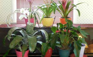 Best Indoor Plants | Hometalk