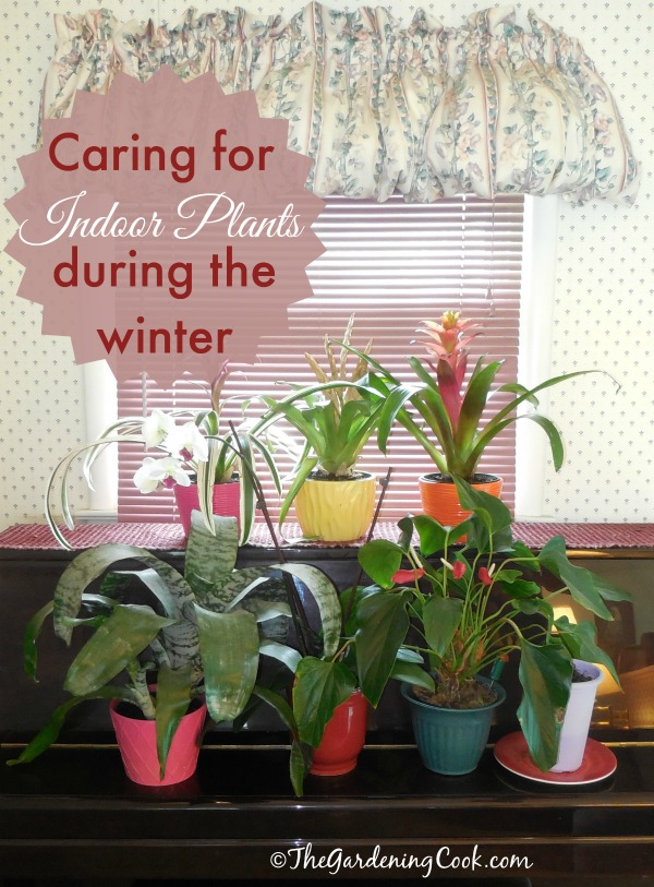 caring for indoor plants during the fall and winter, gardening, home decor