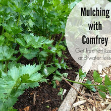 nature nurture grow guide to mulching with comfrey