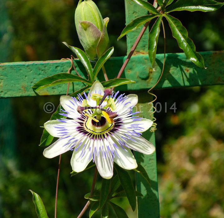 garden ideas italian botanical, flowers, gardening