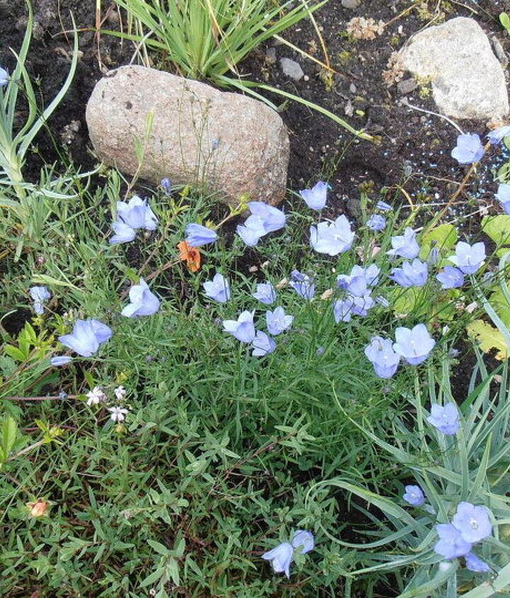scottish garden, flowers, gardening