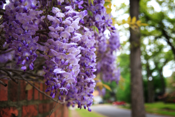 plant these 5 fabulously fragrant flowers sweeten up your garden, flowers, gardening