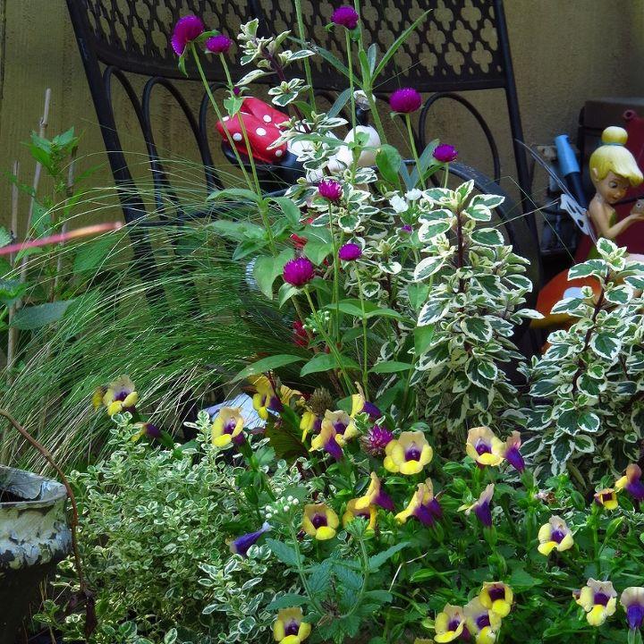 garden ideas flowers tropical whimsies, gardening