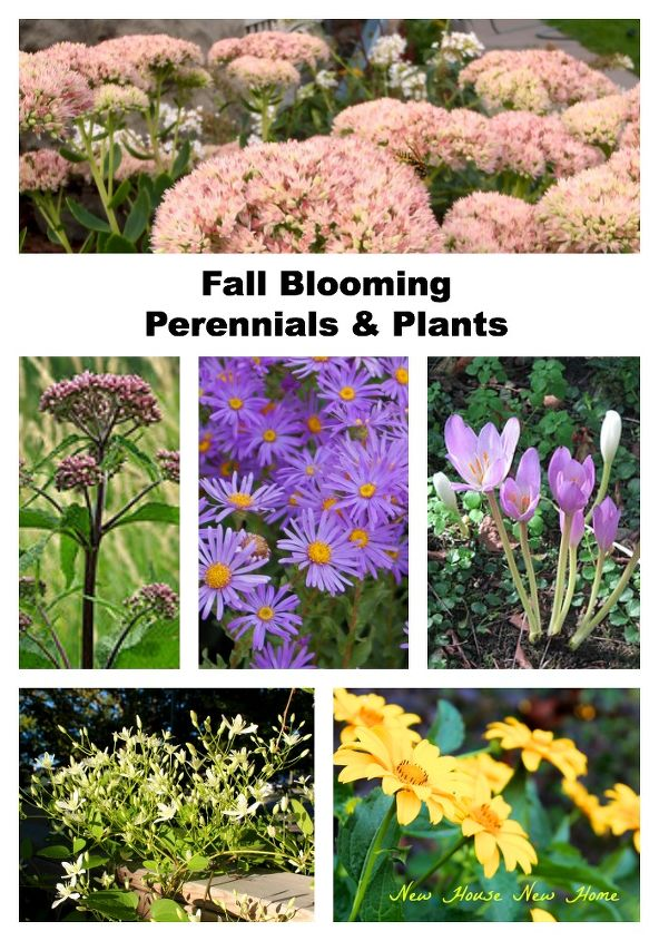 gardening fall color plants flowers, flowers, gardening