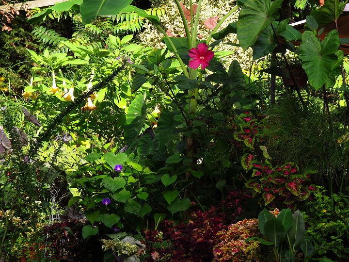 gardening sunlight morning north carolina, flowers, gardening