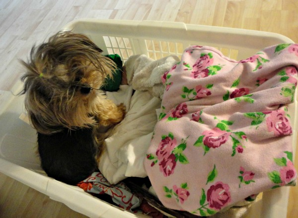 how to make a princess dog bed from an old drawer, diy, home decor, how to, pets animals, shabby chic, reupholster