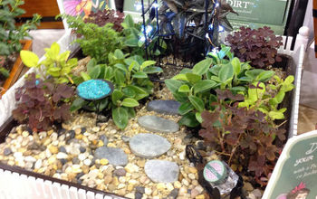 how to plant a fairy garden, container gardening, flowers, gardening, The Garden with a collection of small plants