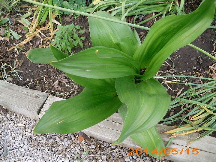 garden tips identifying plant, gardening