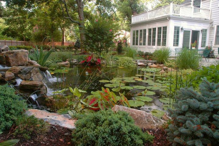 Backyard Water Gardens