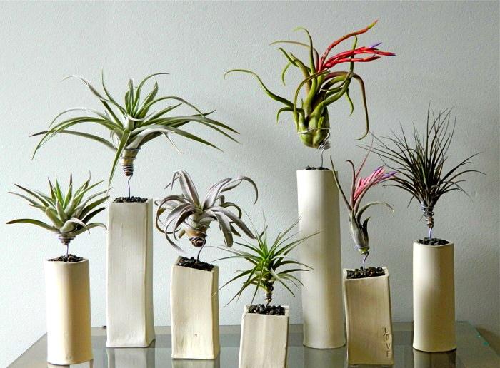 q gardening air plants where purchase buy, container gardening, gardening