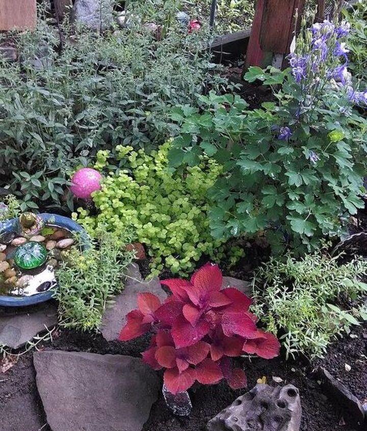 gardening urban backyard flowers, flowers, gardening