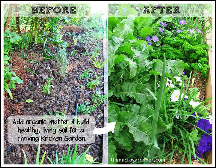 My Potager: An ornamental kitchen garden