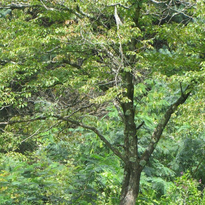 gardening dogwood tree lichens, gardening