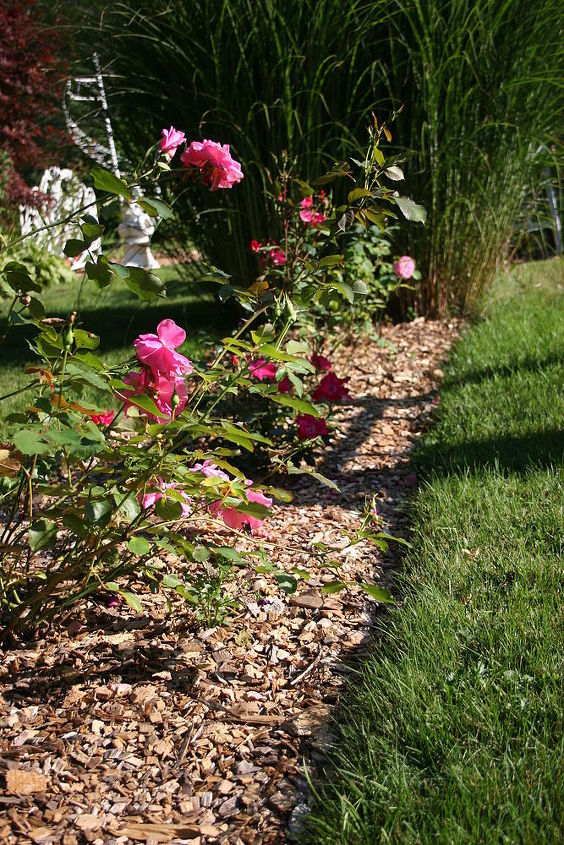 gardening tips roses planting best time, flowers, gardening, A row of rose bushes