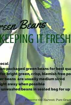 gardening harvest green beans preserving fresh, gardening, homesteading