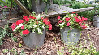 q vintage rusty bucket repurpose upcycle ideas suggestions, repurposing upcycling, 2 of my galvanized buckets I have a few more old buckets around