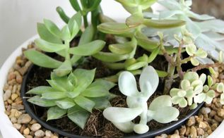 succulent planter housewarming gift, container gardening, succulents