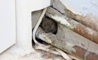 4 tips to keep pesky animals out of your attic, home maintenance repairs, pest control, pets animals