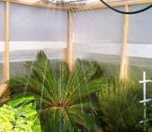 gardening greenhouse build budget winter protection plants, diy, gardening, woodworking projects, Sago Palm Tree Getting a Shower