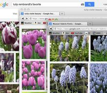 gardening tips tulip combination, flowers, gardening