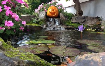 Landscape Ideas For Halloween In The Rochester New York (NY) Area