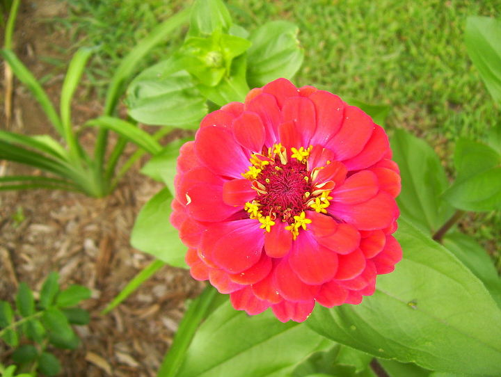 fall gardens new hampshire flowers, flowers, gardening, landscape