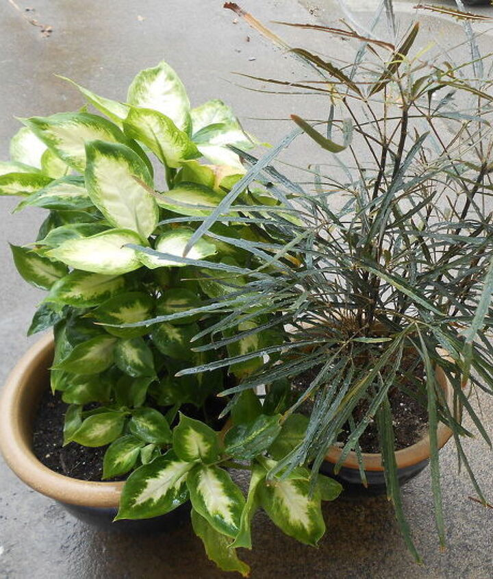 cleaning tips garden plants inside bug free, cleaning tips, container gardening, gardening