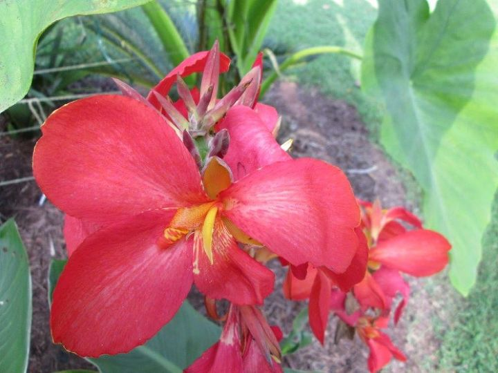outdoor gardening, gardening