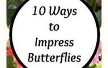 10 Ways to Impress Butterflies