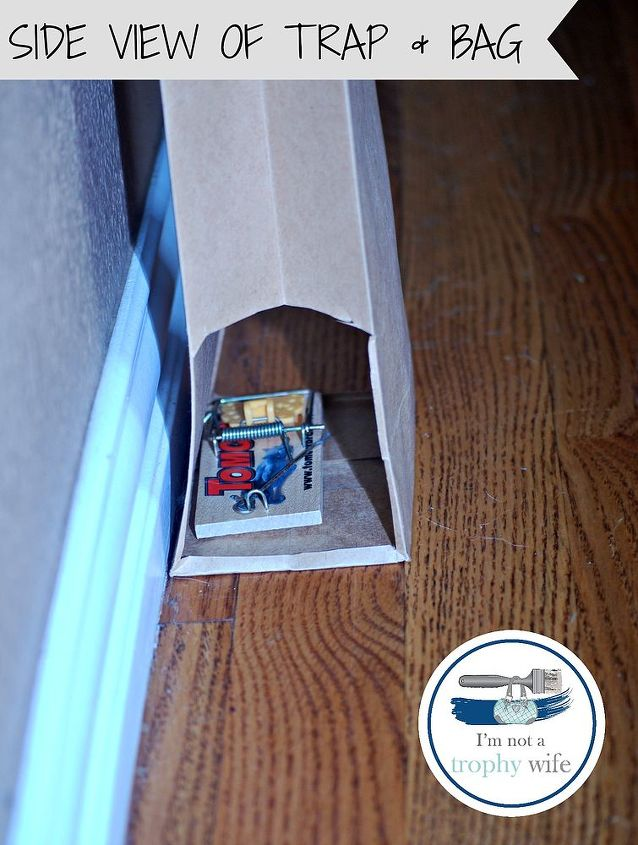 got mice easy solution without the ewww, pest control