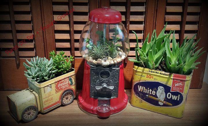 succulents gumball terrarium, gardening, repurposing upcycling, succulents, terrarium