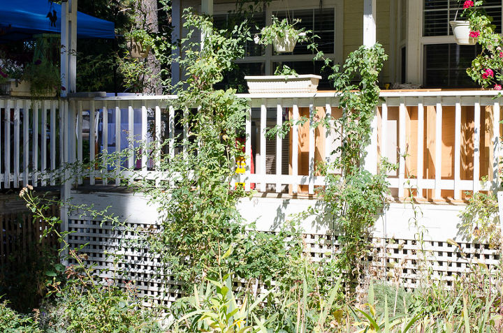 gardening fall pruning flowers climbing roses, flowers, gardening, porches