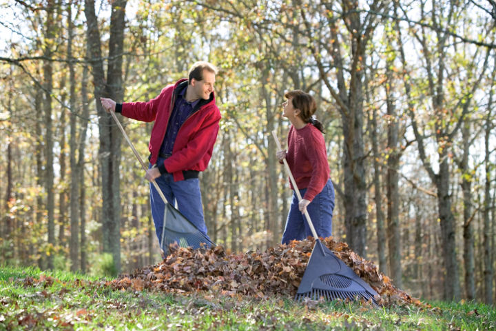 lawn care raking regularly, gardening, lawn care