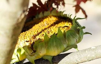 How to Make a Sunflower Bird Feeder