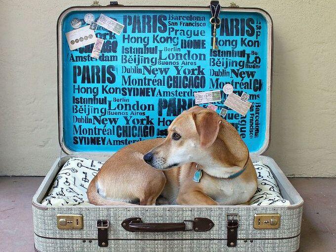 repurpose suitcase pet bed, pets animals, repurposing upcycling, reupholster